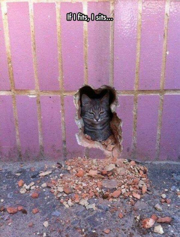 12 фото смешных котов