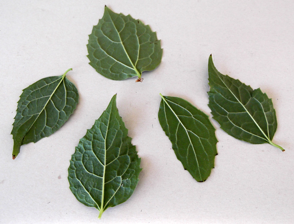 Textile Arts Now: Printing leaves on fabric