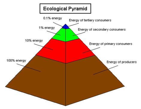 Secondary Consu... Quaternary Consumer