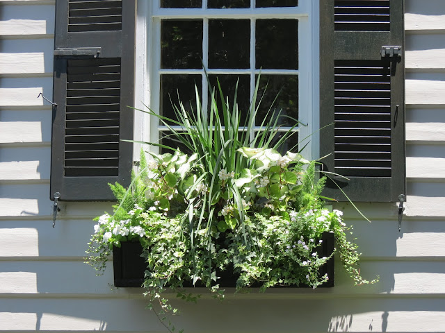 easy to maintain plants hgtv top better homes and gardens tall grass spikes