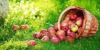 Mengkonsumsi Buah Apel
