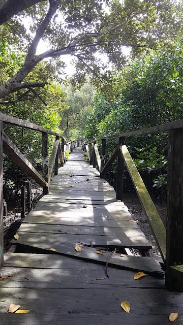 jembatan kayu ulin di hutan Margomulyo