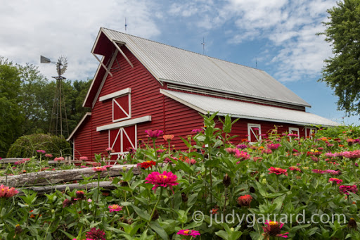Red barn and zinnias