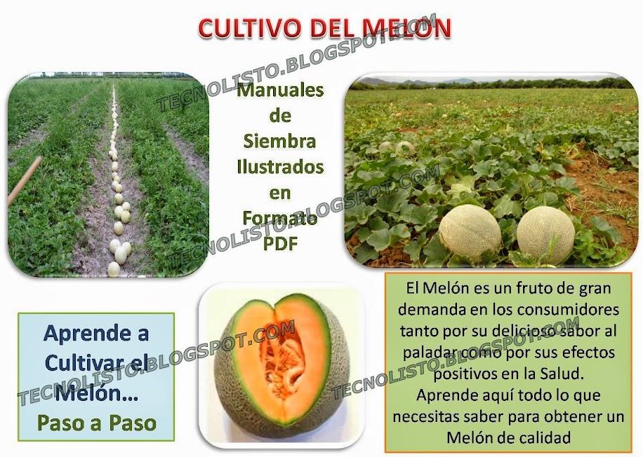 """""""Cultivo del melon"""""""