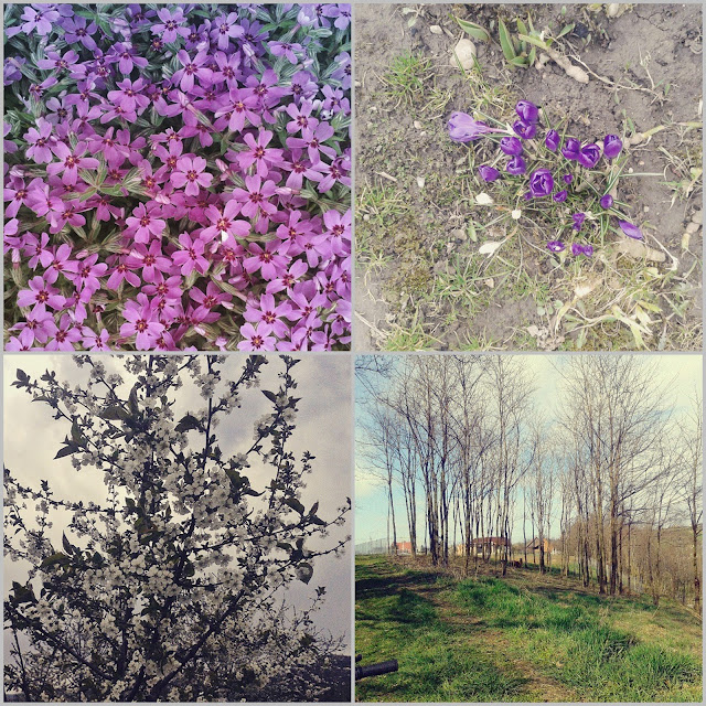 mix zdjęć wiosennych kwiatów