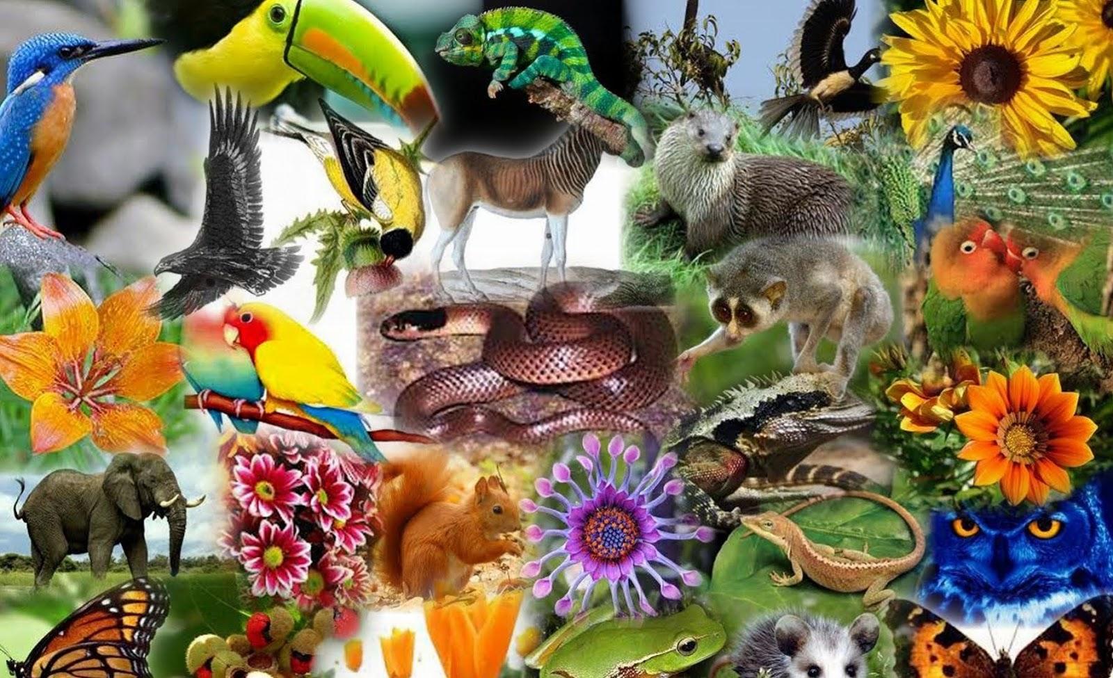 Acordos Internacionais sobre Biodiversidade