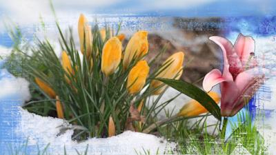 Весна в МИАМ,Сам себе режиссёр, совет мастера, Ирина Белоусова