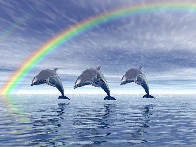 Gambar dan Foto Ikan Lumba Lumba