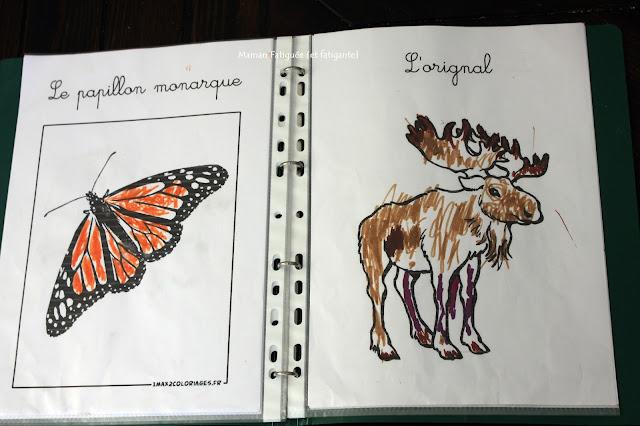 coloriage animaux amerique nord monarque orignal