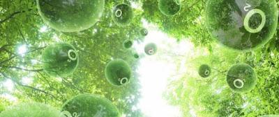 Fotosintesis y biologia de los organismos