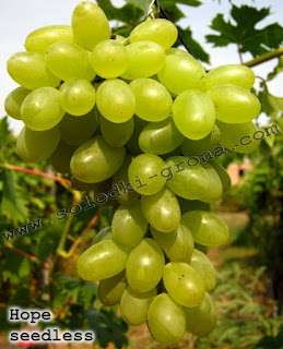 Hope Grape
