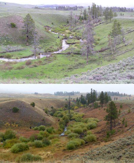O ribeiro de Blacktail Deer em 2005 e em 2017
