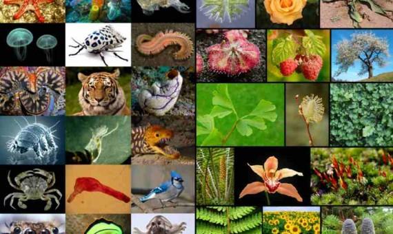 الكائنات الحية