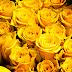 Yellow Roses Images Pics Wallpaper Photos Bouquet in HD FREE Download