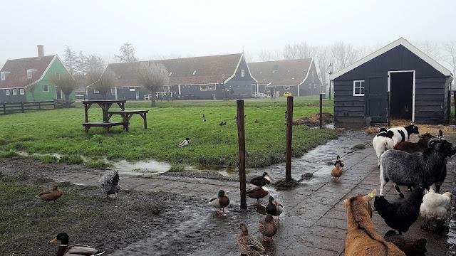 Various animals at Catharina Hoeve Cheese Farm