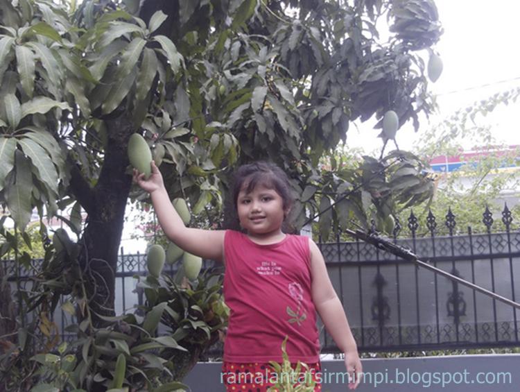 Tanaman ini sama nama buah dan pohonnya 11 Arti Mimpi Memetik Buah Mangga Menurut Primbon Jawa