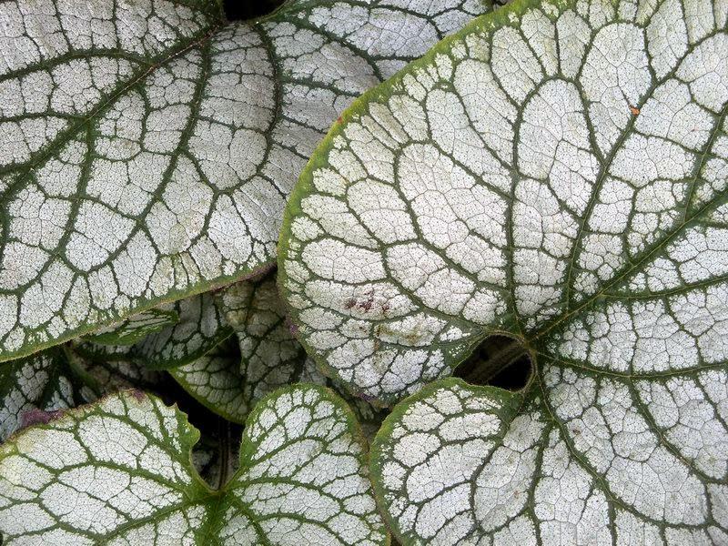 Fractals on leaves