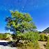 Tο «Δέντρο του Λάγουρη»