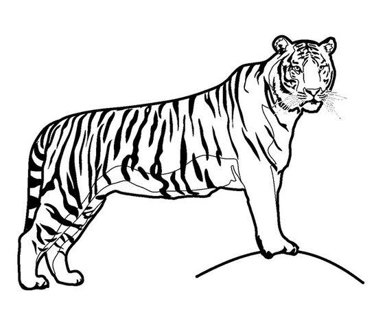 Tranh tô màu con hổ đứng trên mỏm đá