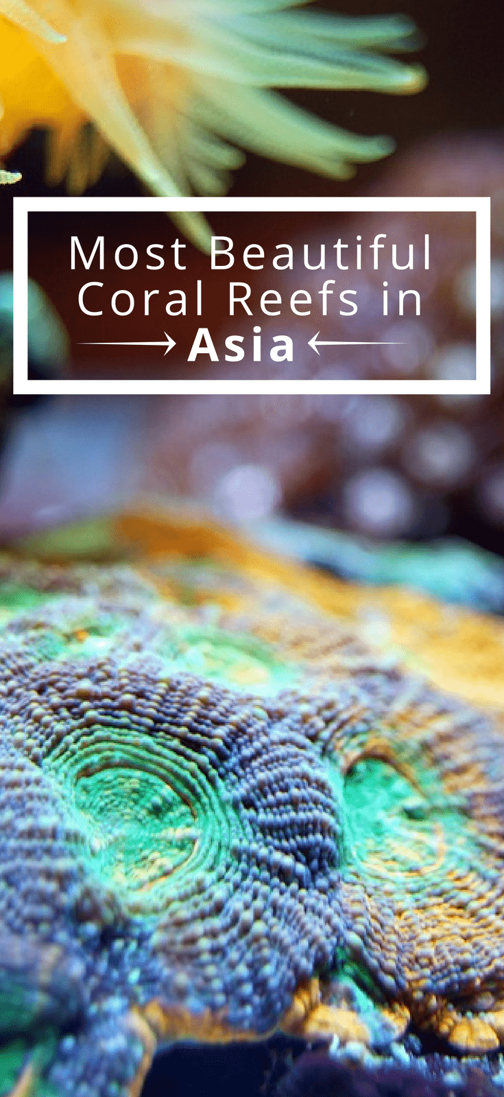 The Most Beautiful Coral Reefs In Asia
