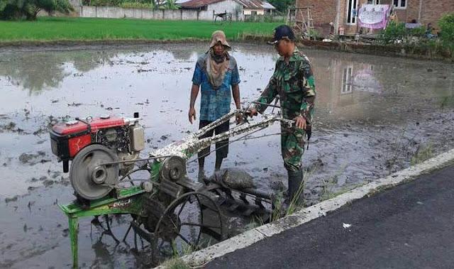 Menggunakan Handtractor, Anggota Babinsa Membajak Sawah Bersama Petani di Kelurahan Mencirim