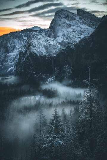 Black Forest and White Fog on the Mountain