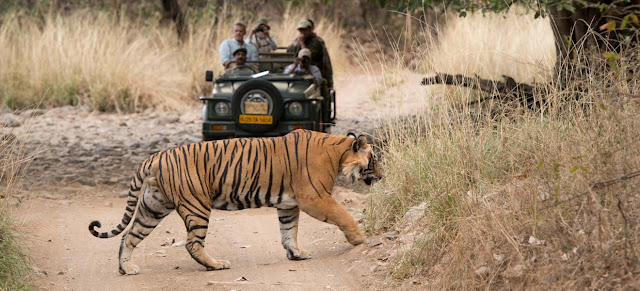 Experience the Thrill of Pench National Park with Deccan Odyssey