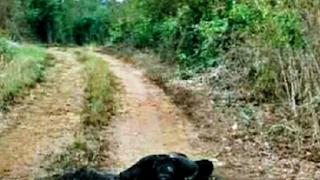 Pobladores de Tenango atrapan a ladrón y lo queman vivo en Río Blanco Veracruz