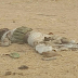 Update: Army's statement on the suicide bombers intercepted in Borno State (Graphic photos)