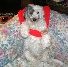 tratamento megaesôfago em cães