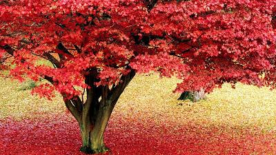 piante-da-giardino-con-foglie-rosse