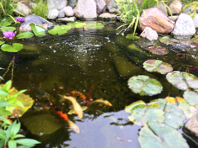 Aeration is the best method for pond oxygenation