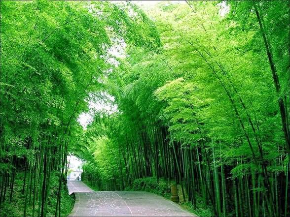 http://4.bp.blogspot.com/-5dnbxflbcmQ/U0bbvaVEthI/AAAAAAAAA84/fAY5IN3Sxfk/s1600/bambu+eksotis.jpg