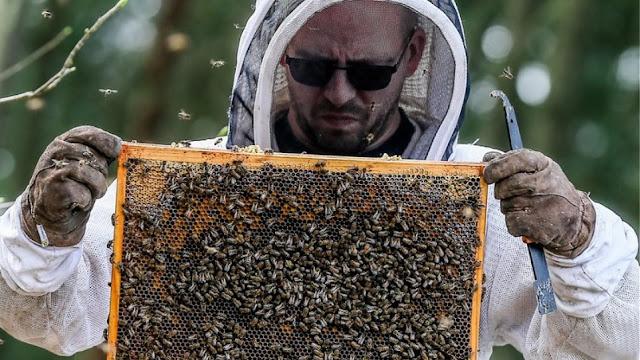 Η ΕΕ απαγόρευσε τρία εντομοκτόνα για να προστατεύσει τις μέλισσες