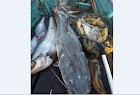 Musim Kemarau, Warga Akui Tangkapan Ikan Meningkat