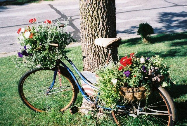 Bike Filled With Flower Full View