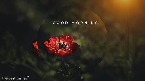 good morning images with red flowers hd