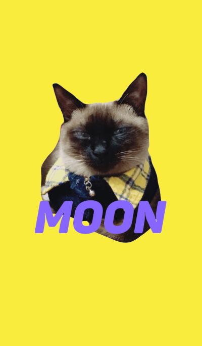Siamese cat MOON