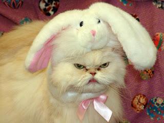 Pets wearing bunny ears