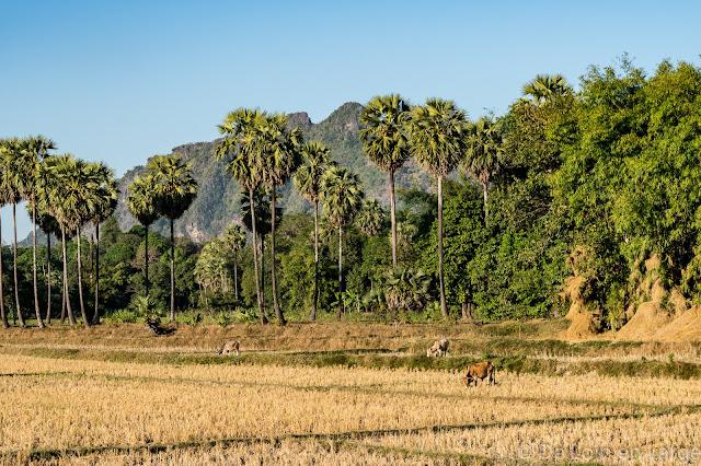 Lat Ka Na - Région de Hpa An - Myanmar Birmanie