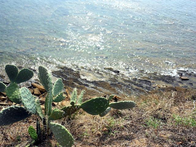 Il mare a settembre: il Cilento