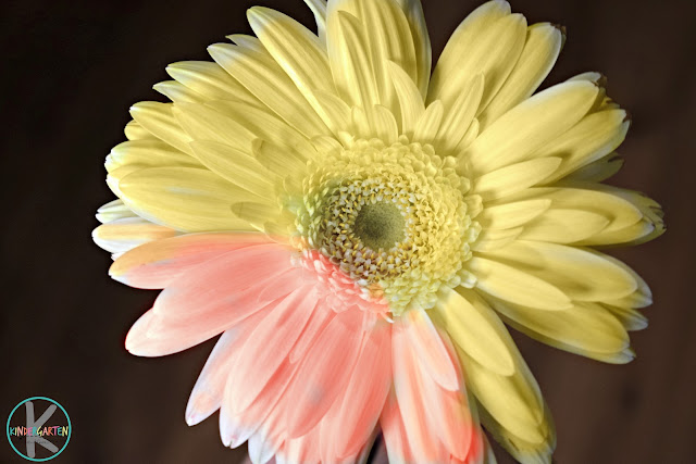 flower-kids-activities-toddler-preschool-kindergarten-first-grade-2nd-3rd-summer-spring