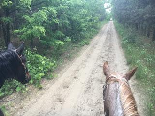 Unkari, El Bronco, Riitta Reissaa, laukka, Horsexplore