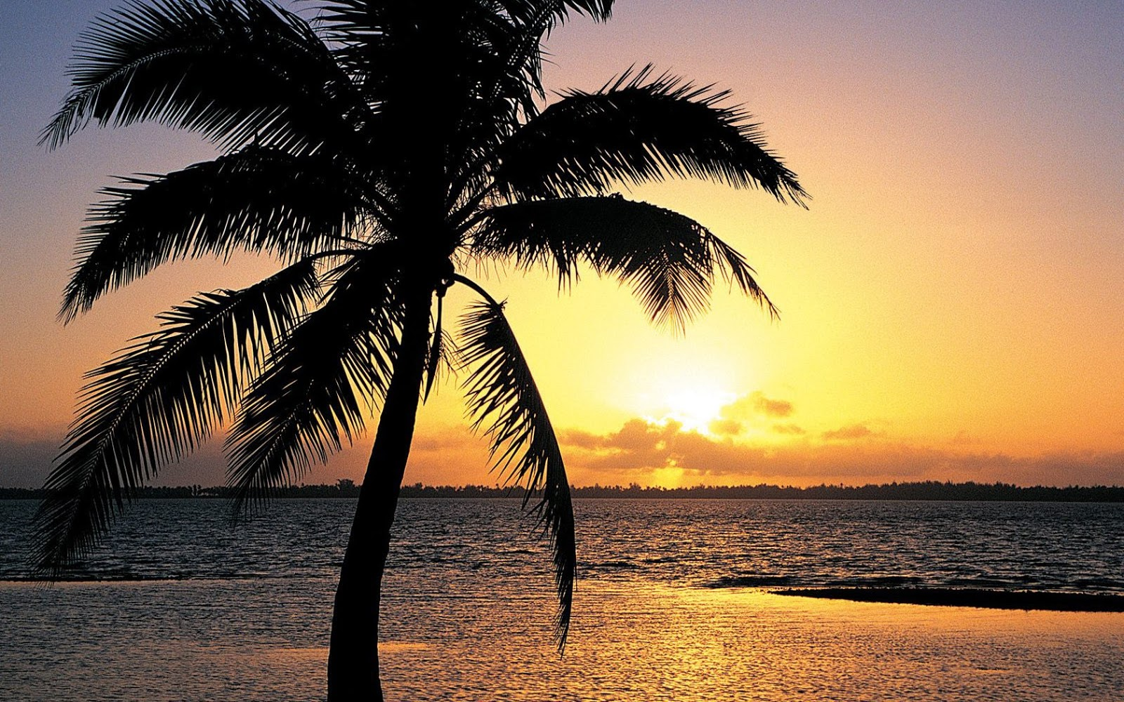 Palm Trees On The Beach: Tropical Island Sunset