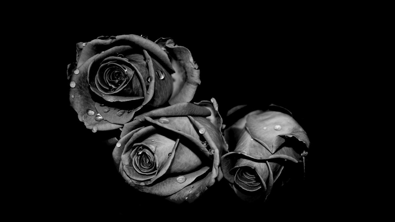 Чорні Троянди  Анонс повного розпродажу! Повний розпродаж з шостої ... c1087626070bb