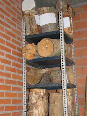 Construcción de nidos para páridos