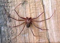 Picaduras-de-Arañas