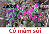 Phu kien hoa pha le tai Phu Luong