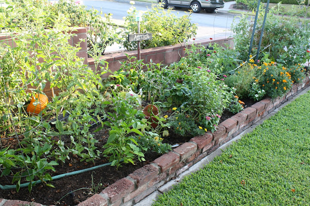 urban vegetable garden, small lot farming