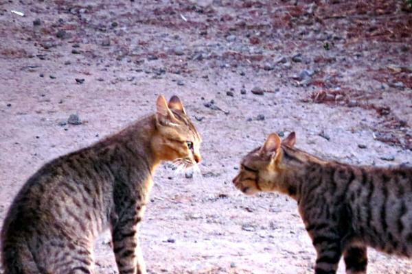 cats of bandung